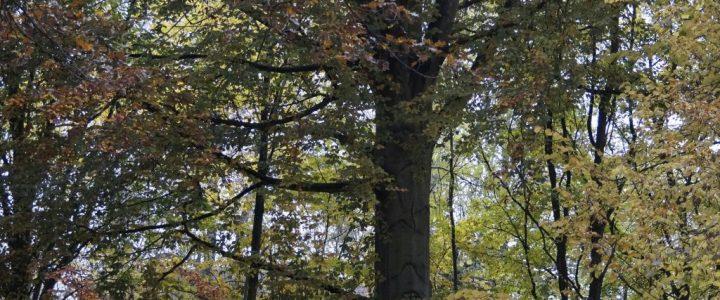 Rethener Park – Haushalt 2017